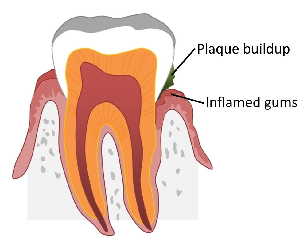 Carlson Biological Dentistry